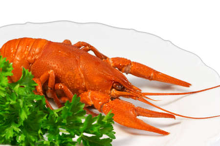 Closeup of crayfish on plate - isolated on white background