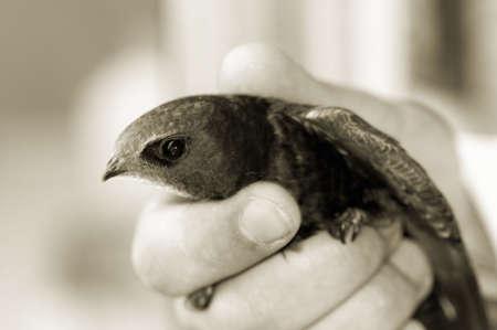 Freedom concept - focus on the bird head Zdjęcie Seryjne