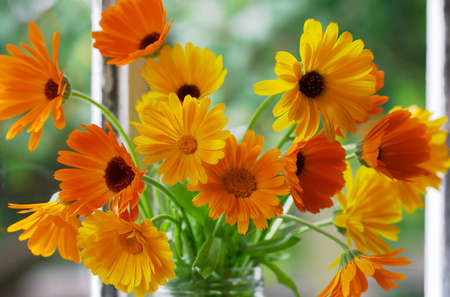 Closeup of orange flowers on window-sill. Calendula Officinalis L. photo