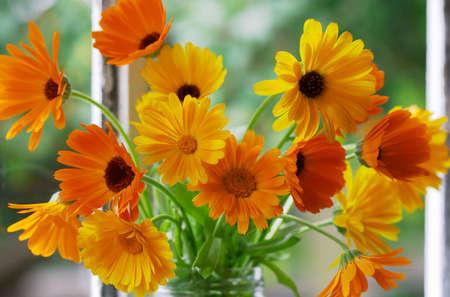 officinal: Closeup of orange flowers on window-sill. Calendula Officinalis L.