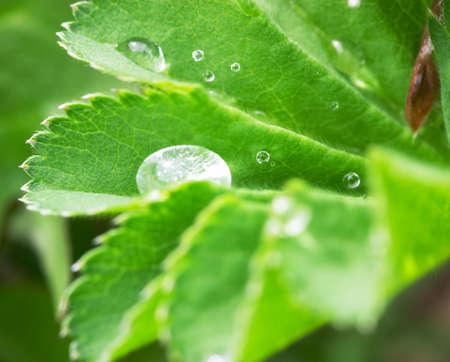 Closeup of drops on leaf
