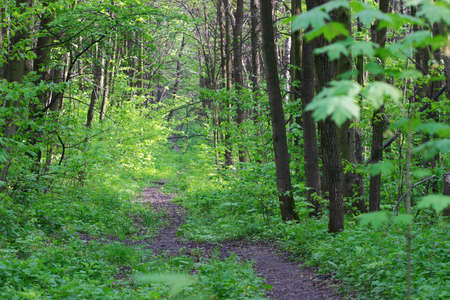 Path in spring forest background
