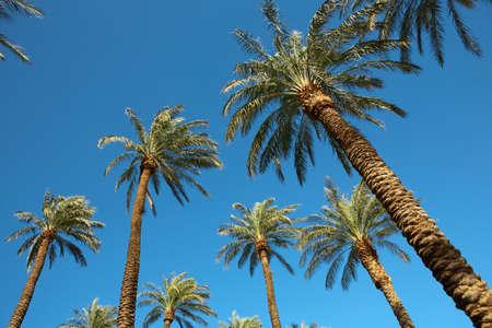 Palms on blue sky. Las Vegas. Zdjęcie Seryjne
