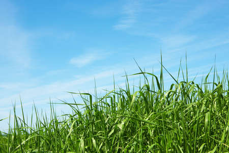 Nature background - green grass knoll and blue sky