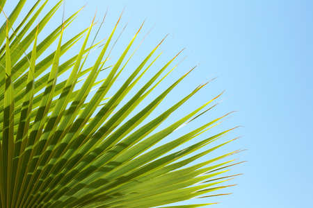 Closeup of palm leaves on blue sky - Red Sea, Sinai, Sharm el-Sheikh Zdjęcie Seryjne