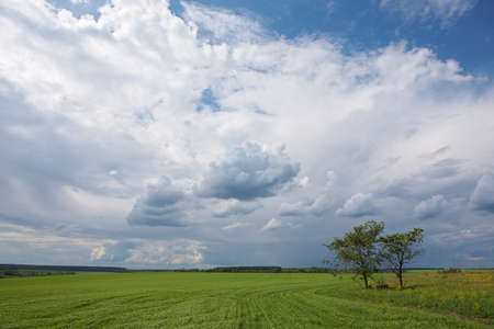Nature countryside background: green grass field, blue sky, clouds, two trees Zdjęcie Seryjne