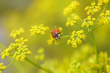 Red bug on yellow flowers