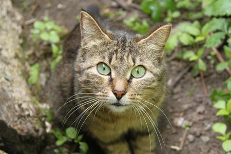 inquiring: Inquiring look of a cat