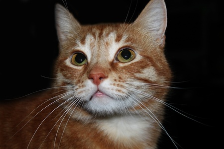 narrowly: mysteriously smiling cat Stock Photo