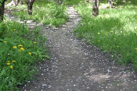 Ruta de acceso en un jard�n cubierto con p�talos de Manzano