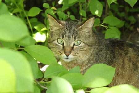 interrogatively: Strict cat