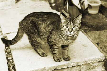 forage: homeless cat looks plaintively, hopes for a forage Stock Photo