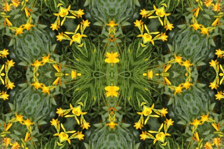 abstract background with yellow lilies Stock Photo - 9706439