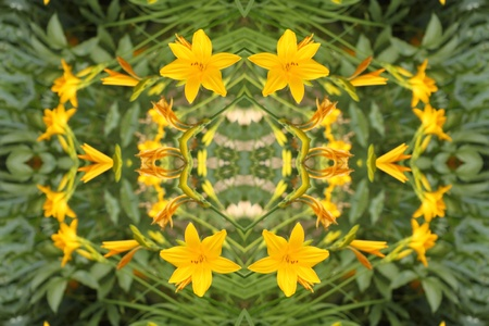 abstract background with yellow lilies Stock Photo - 9706222