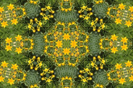 abstract background with yellow lilies Stock Photo - 9706237