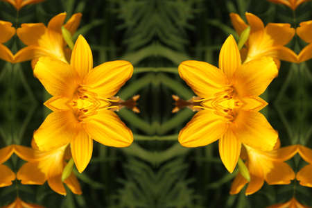 Abstract ornament with yellow lilies Stock Photo