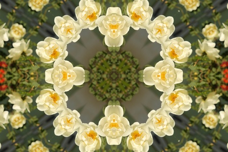 Abstract background with white roses Stock Photo