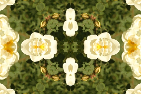 Abstract background with white roses photo