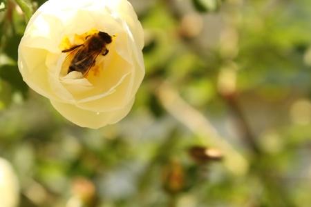 Abeja y una flor