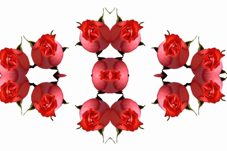 Abstract background with red roses photo