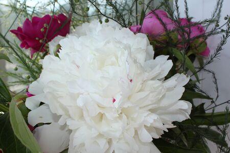 bouquet of white gladioluses Stock Photo