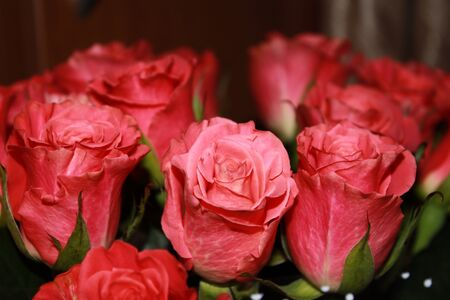 Bouquet of red roses Stock Photo - 12164787