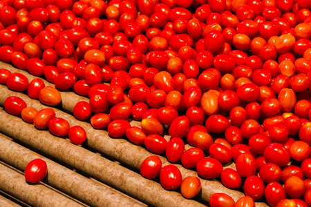 conveyor: Cherry tomatoes ready to be packed with a machine