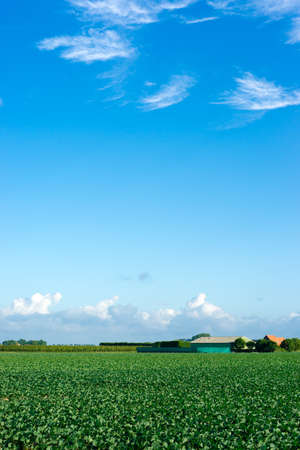 earthy: Farmland filled with cabbage and a blue sky Stock Photo