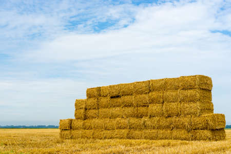 hay bales: A stack of hay bales in a rural landscape