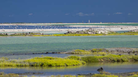 Salt flats in Bonaire (netherlands antilles). Green gras in the foreground, lighthouse in the background. Turquoise and blue water, blue Sky. Stock Photo