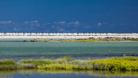 Salt flats in Bonaire (netherlands antilles). Green gras in the foreground. Turquoise and blue water, blue Sky. Stock Photo