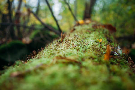 Tree fallen on the ground and covered with green moss and mushrooms blured background Stock Photo