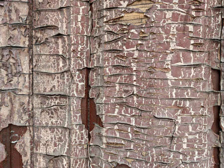 Old door with brown paint with large cracks. Convex bas-relief. The Red tree Фото со стока