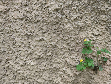 A wall of cement. The green plant with the yellow flower