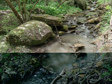 Stones with moss in a small stream in a green forest. Green plants and trees. Dry branches. Zdjęcie Seryjne