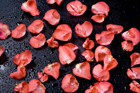 Red rose petals on the studio abckground Stok Fotoğraf