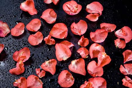 Red rose petals on the studio abckground Archivio Fotografico