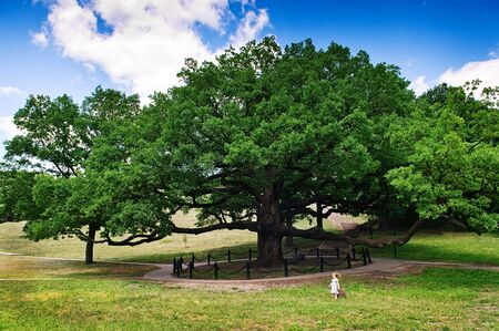 Huge old tree and tiny girl Stock Photo - 7874393