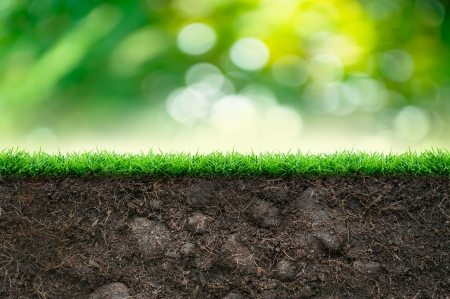 Soil and Green Grass in Beautiful Background photo
