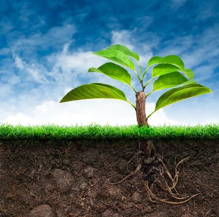 El árbol de Origen y del suelo con la hierba en el cielo azul Foto de archivo