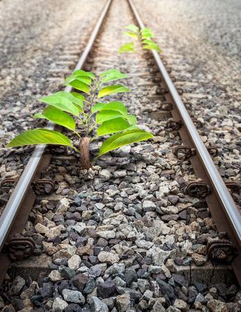 origin: Small Origin Tree in The Railroad