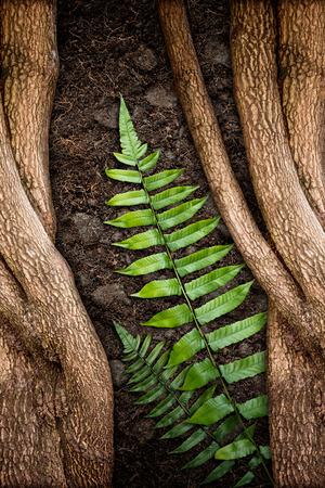 녹색 펀 및 토양의 질감과 나무