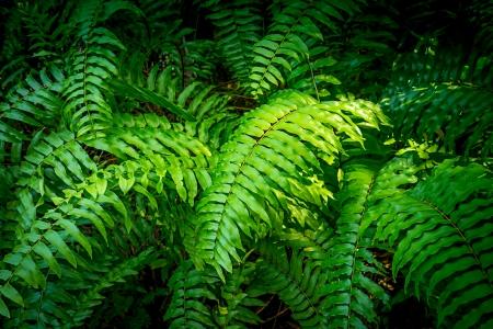 숲에서 녹색 펀의 부시 스톡 콘텐츠