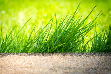 clump: The Clump of Green Grass in Sidewalk