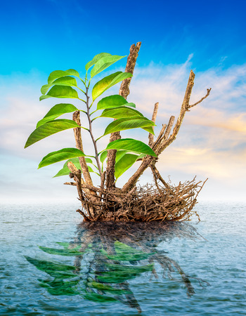 gnarled: Sprout on dead tree floating in the sea