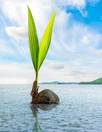 Bud of coconut floating in the sea