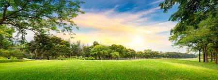 Tree in golf course on sunset time Reklamní fotografie - 27748713