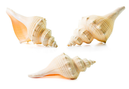 Group of the sea shell isolated on white photo