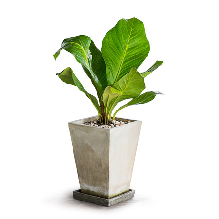 흰색에 고립 된 장식 녹색 관엽 식물