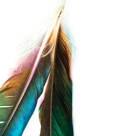 pluma: pluma de p�jaro hermoso aislado en blanco Foto de archivo